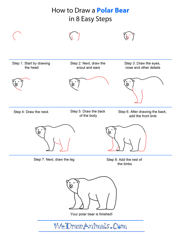 Drawn polar  bear step by step Polar Draw Draw A A