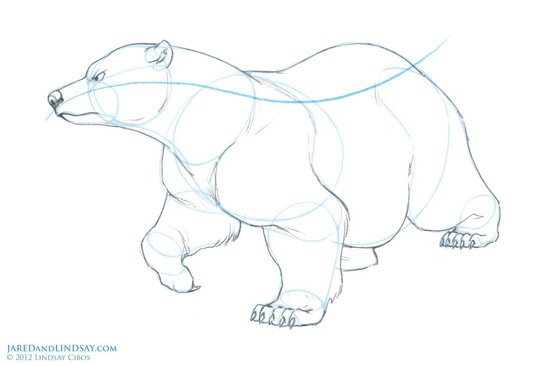 Drawn polar  bear disney – Drawing Bears Polar Bear