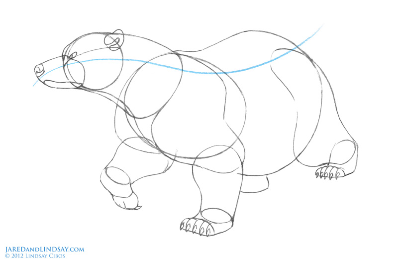 Drawn polar  bear line drawing To the Bears of Step