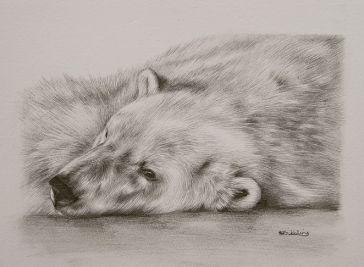 Drawn polar  bear pencil drawing Pencil Polar bear of of