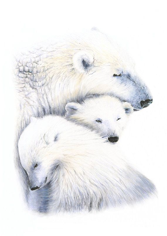 Drawn polar  bear pencil drawing Art Pinterest bear ideas art