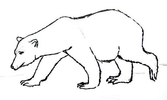 Drawn polar  bear black and white Becuo Polar bear cubs ideas
