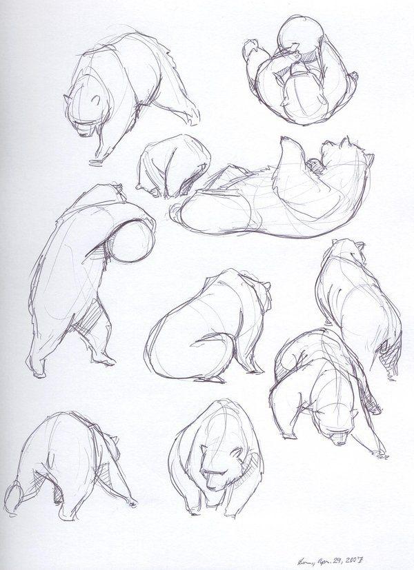 Drawn bear sketch On Bear Sketches2 · Dragon2524