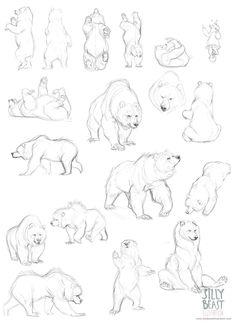 Drawn bear sketch Bear love Ciaran sketch Illustration