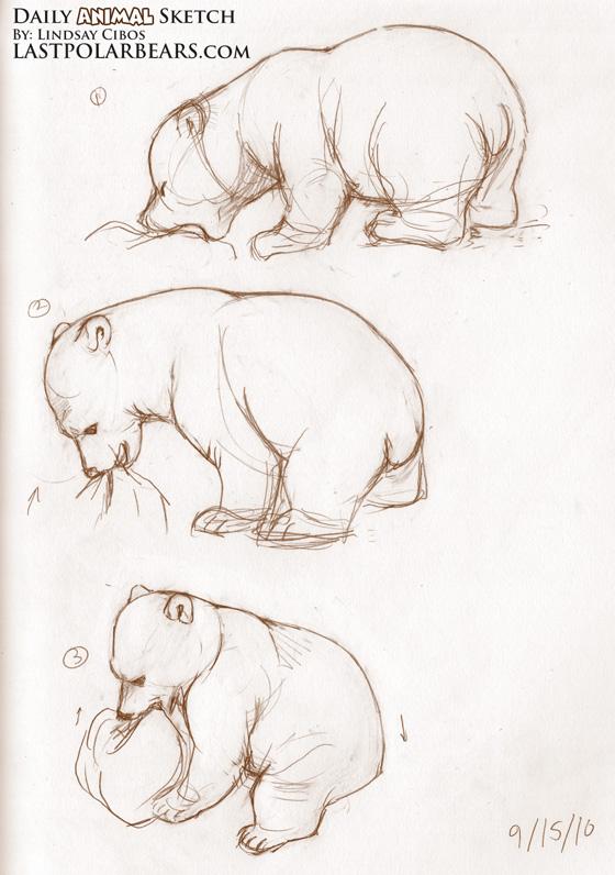 Drawn bear sketch Com/dailysketch/daily brown Bear  Sketch