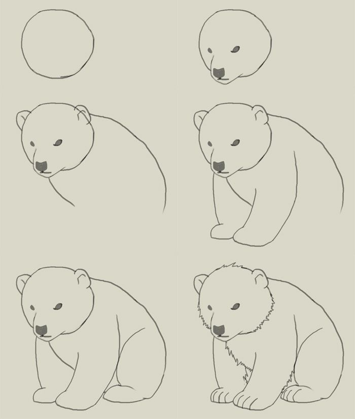 Drawn polar  bear step by step Pinterest Best Pin cub on