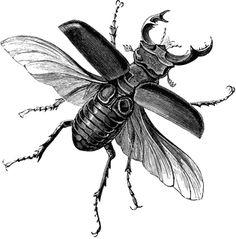 Drawn beatle Projekt Male Stag Beetles 26
