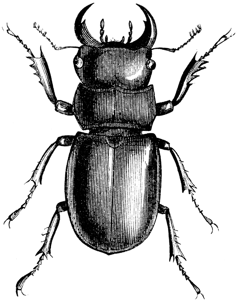 Drawn beelte A is beetle is and