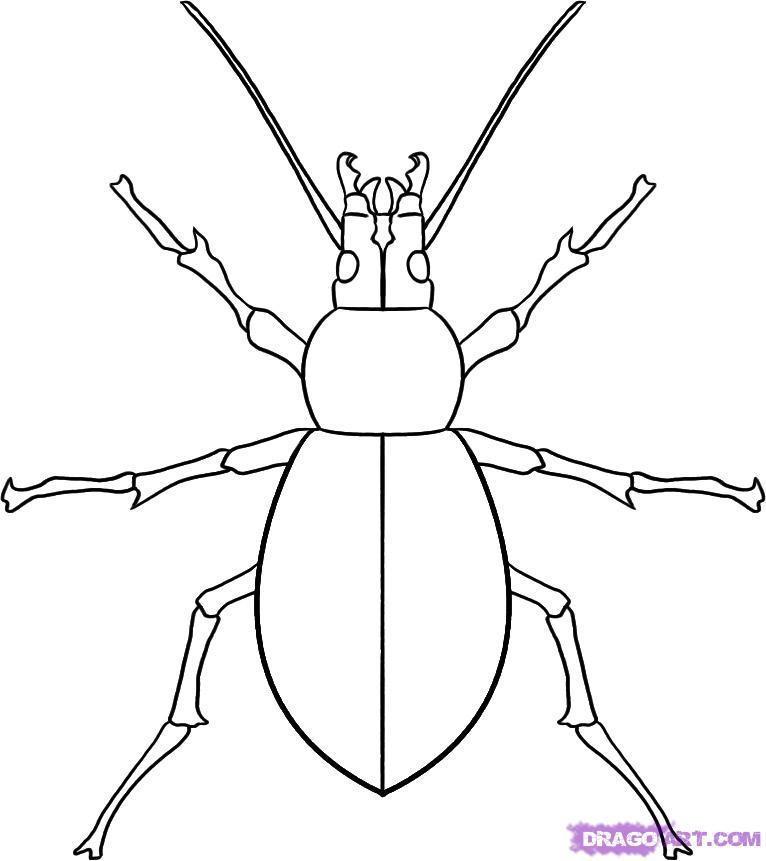 Drawn insect #5