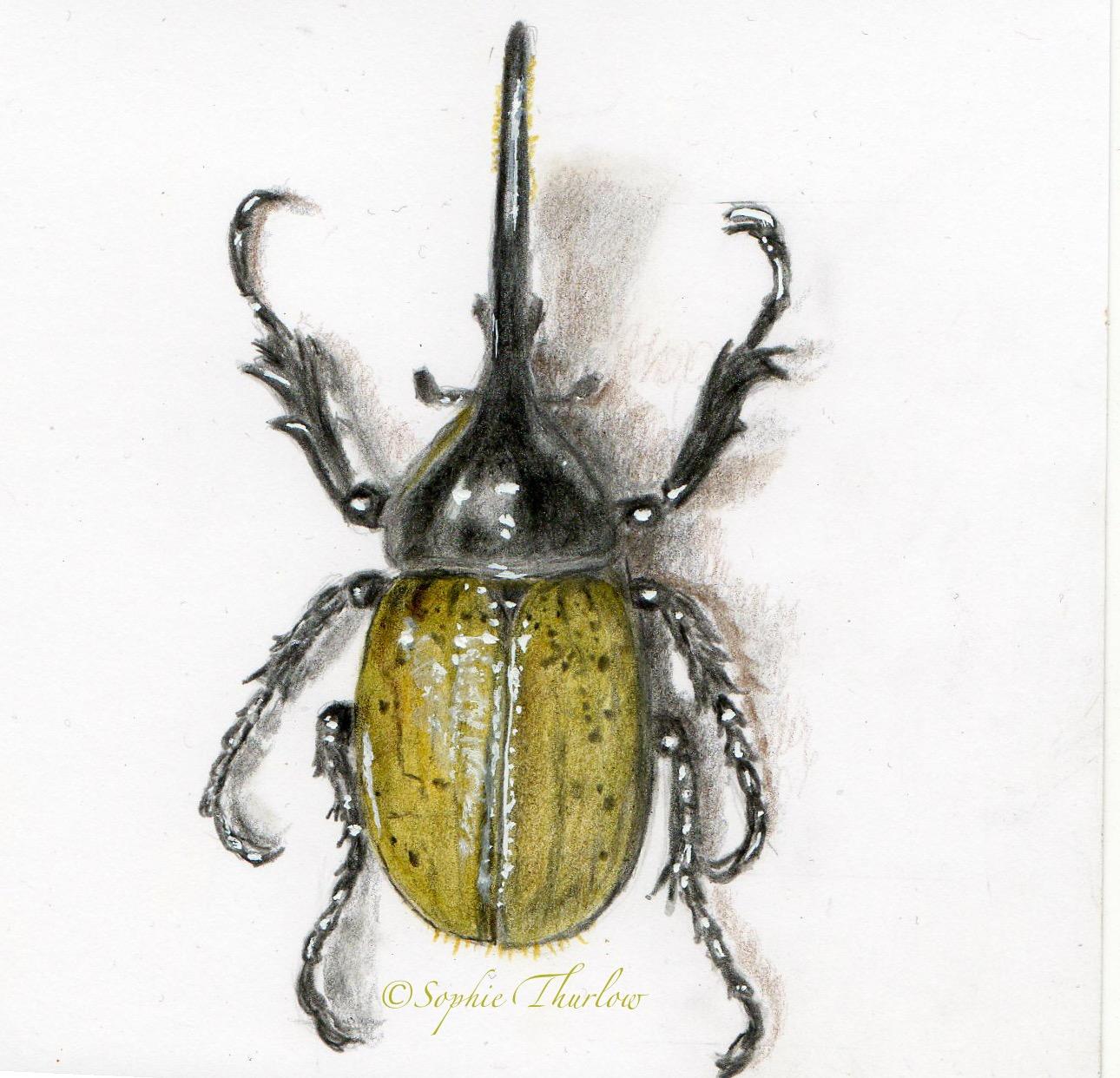 Drawn beatle hercules beetle #6