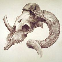 Drawn sheep lamb Skull Elements= charcoal Ram Search