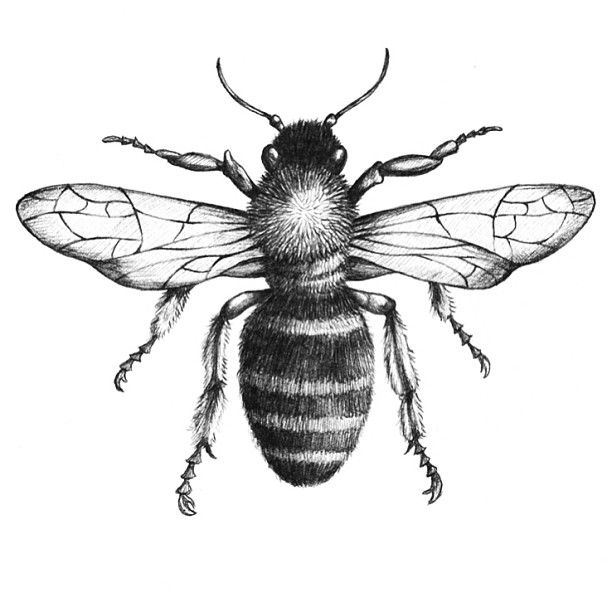 Drawn bees Find on this Drawing Pinterest