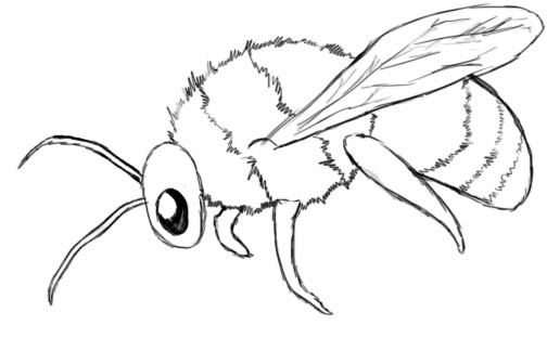 Drawn bees Draw the A that you