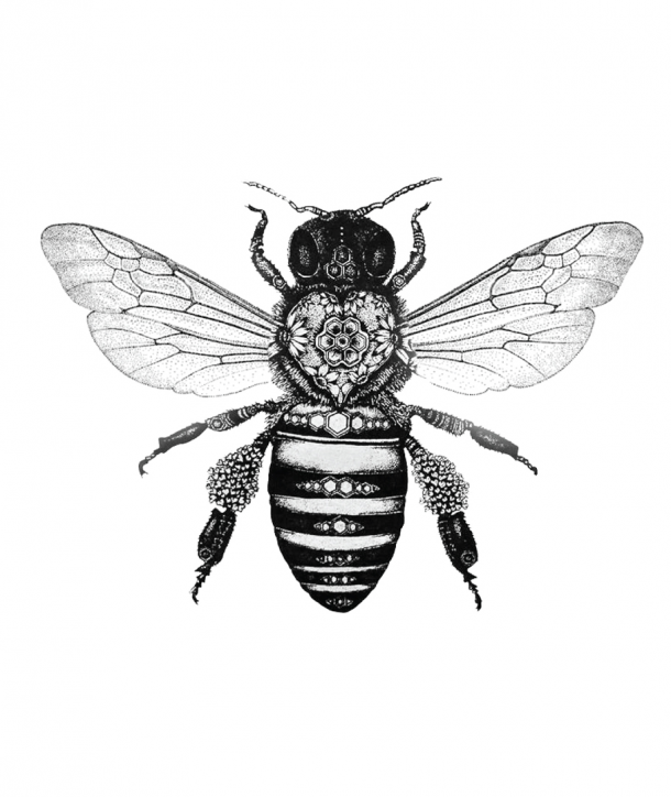 Drawn bee Images Bumble Images bumble