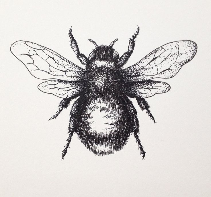 Drawn bee Pinterest by LordColinOneal 25+ on