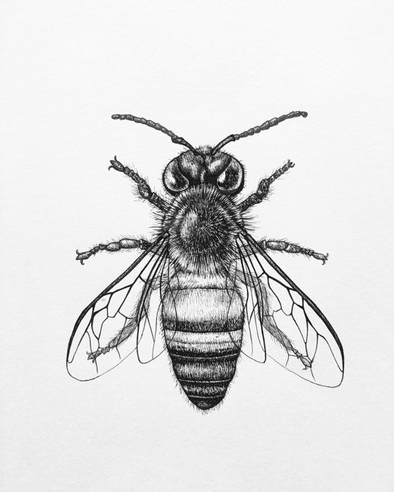 Drawn bee Ideas and Ink on Pinterest
