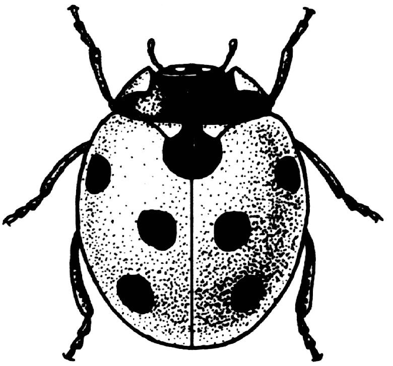 Drawn bug ladybug  Control Biological News Midwest
