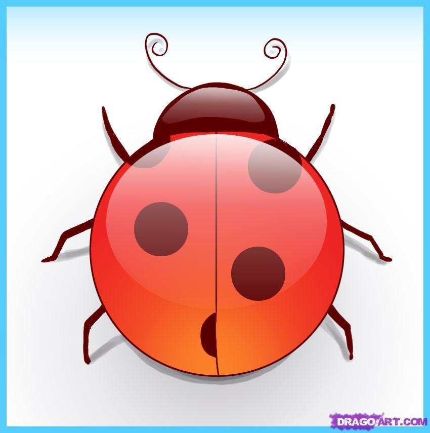Drawn bug ladybug Bugs by Animals Step how