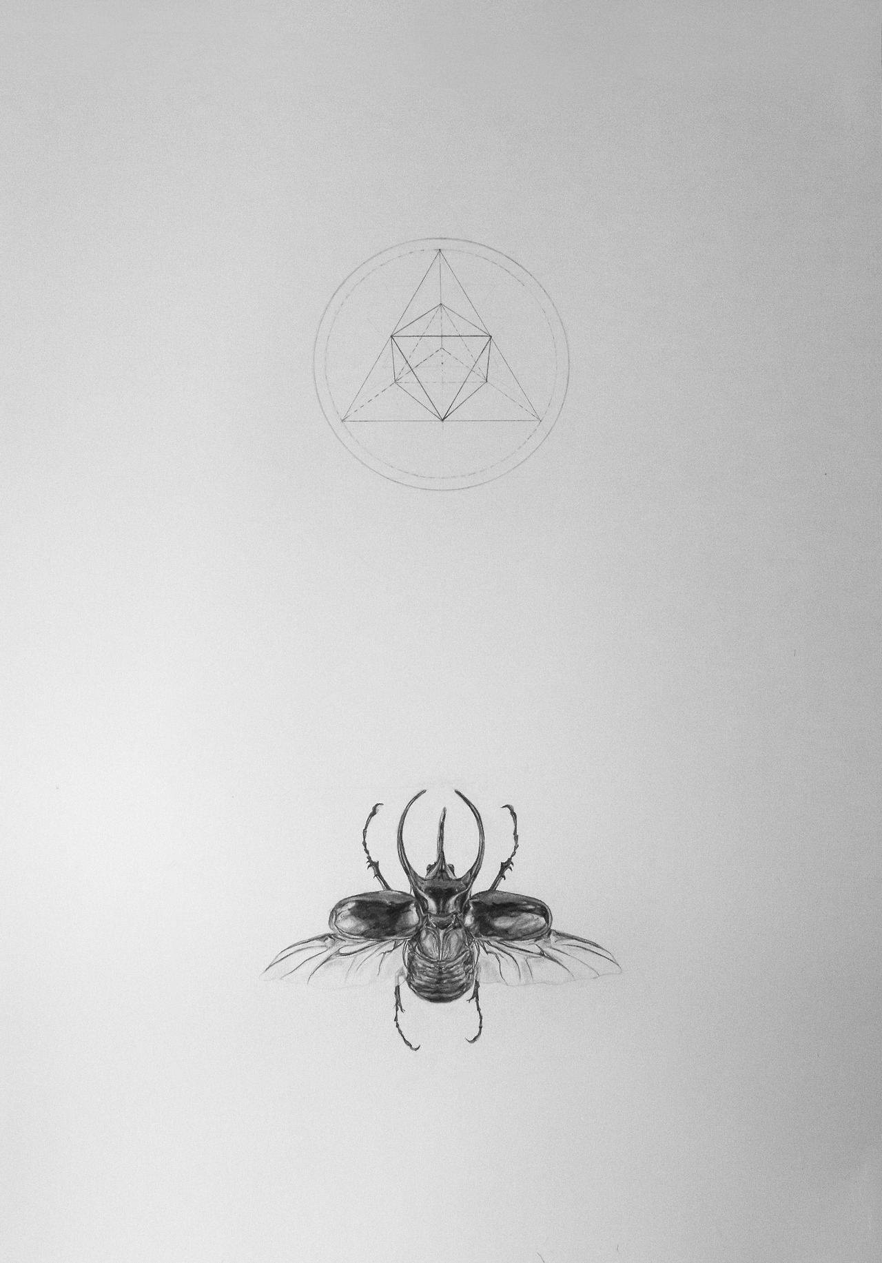Drawn bugs scarab beetle #sacred #sacred #scarab Scarab #rhino