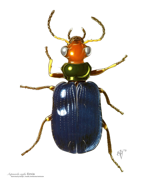 Drawn bug entomology Cronaflex Museum: from using made
