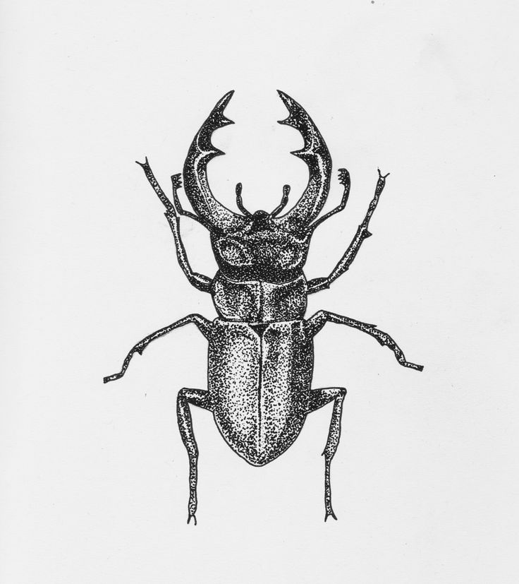 Drawn bug artistic Ink or drawing stippling on