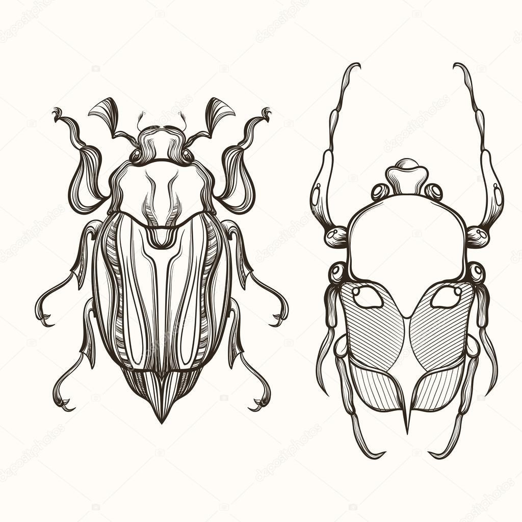 Drawn bug beetle Bug Scarab  and May