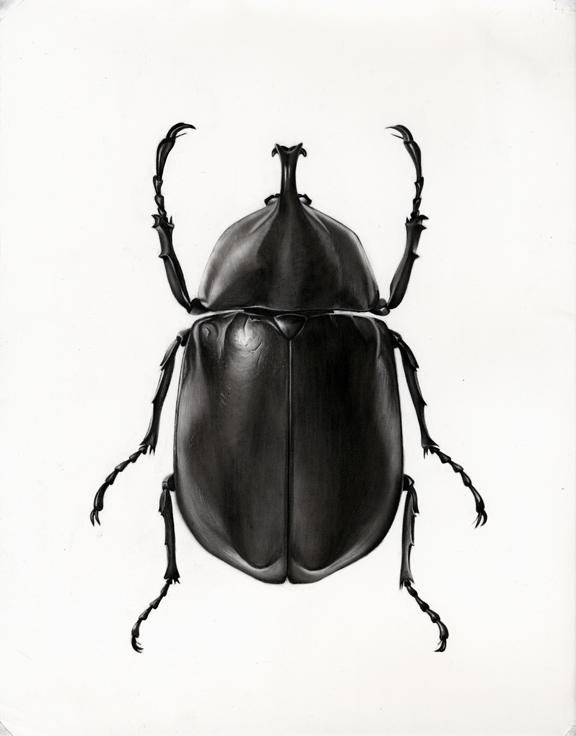 Drawn beetles By http://medillin  com/art ~MedIllin