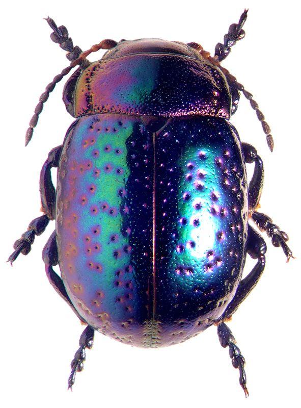 Drawn beetles And Beetle on  ideas