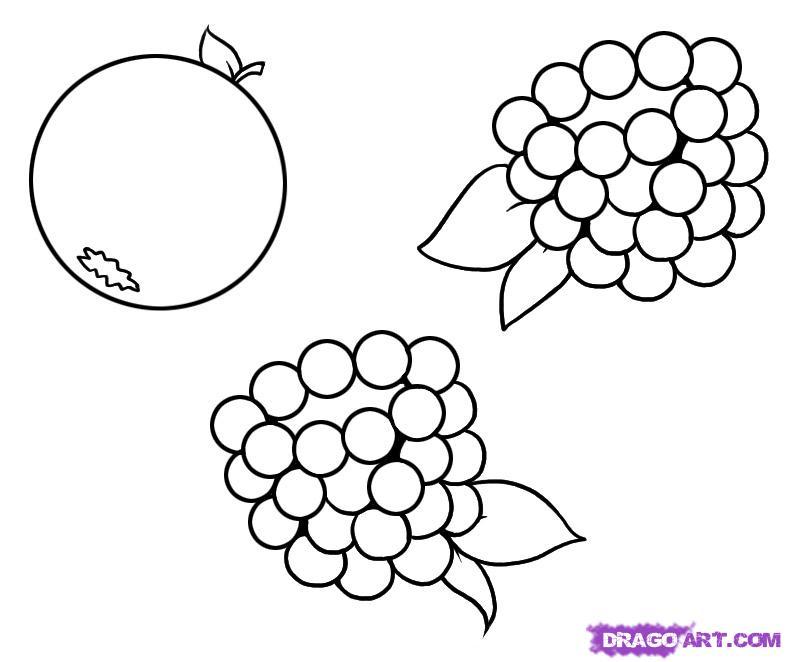 Drawn berry How berries Berries Food draw