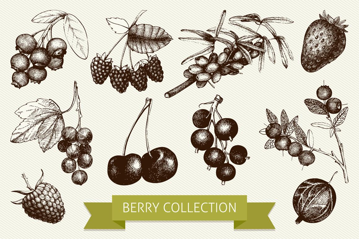 Drawn berry Berry on about design on