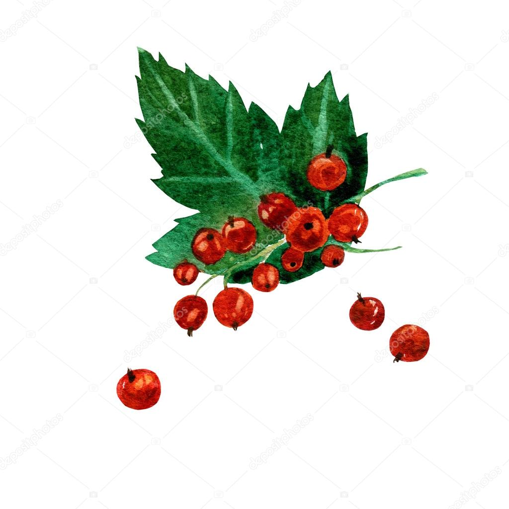 Drawn berry Currants on painting illustration on