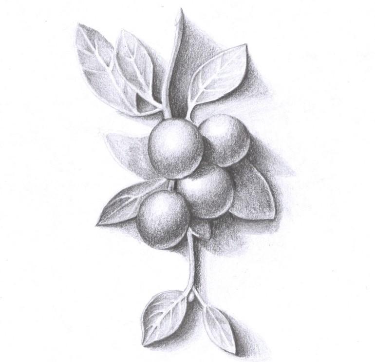 Drawn berry Berries 10 Draw berries Draw