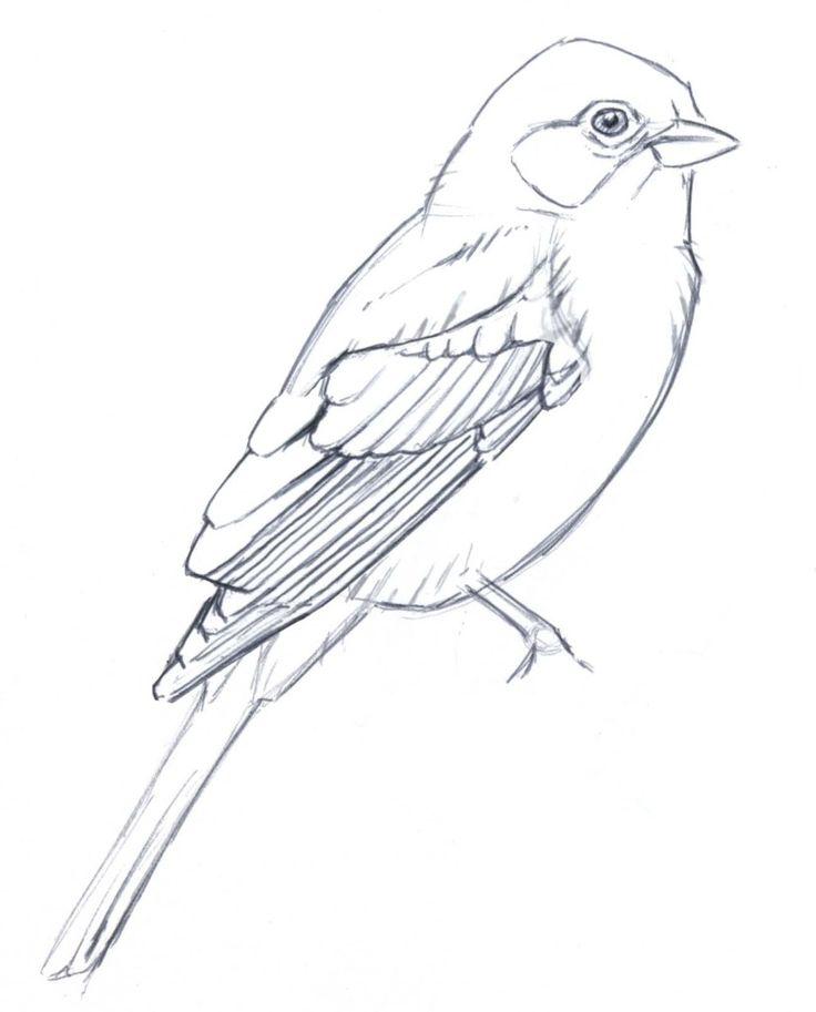 Drawn bird Simplifying Pinterest stuff about Birds