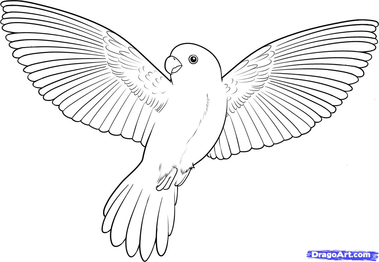 Drawn bird How Flying  by a