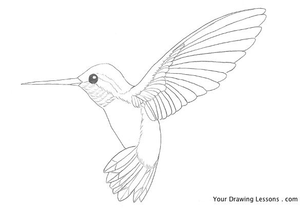 Drawn brds A Hummingbird bird – To