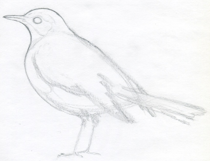Drawn brds Of a this bird body