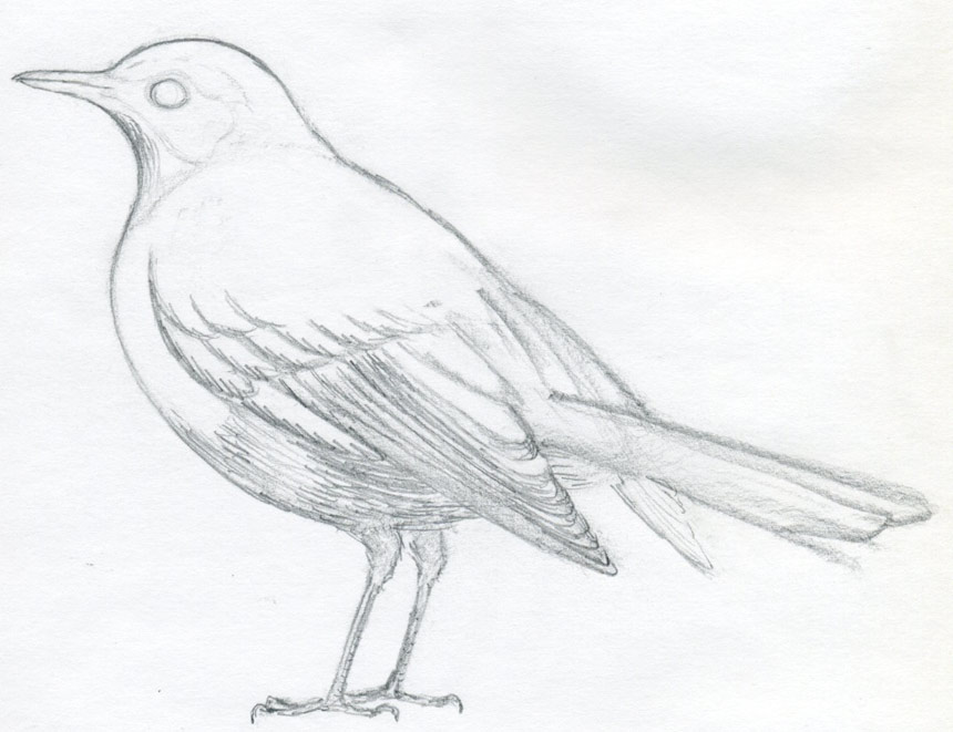 Drawn bird If How the you to