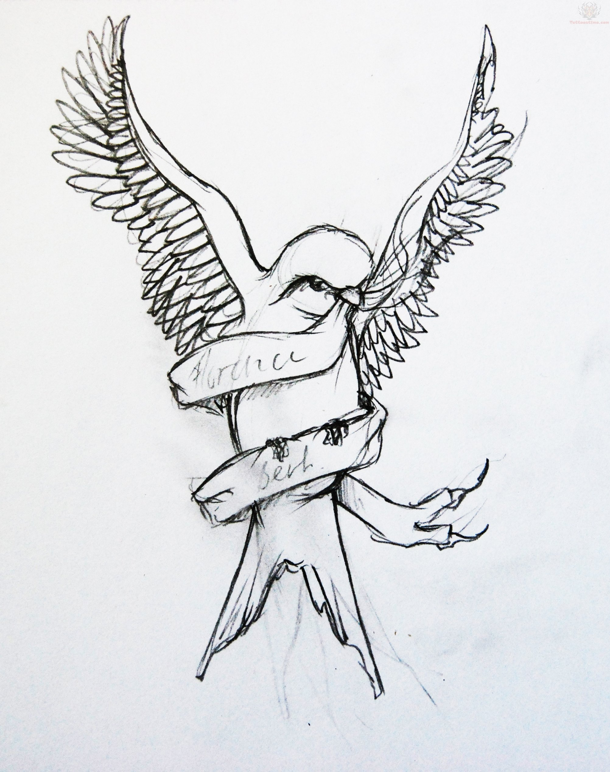 Drawn swallow pretty bird #11