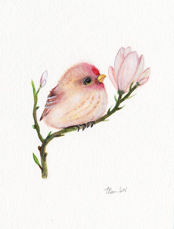 Drawn brds baby bird 5x7 decor on bird ideas