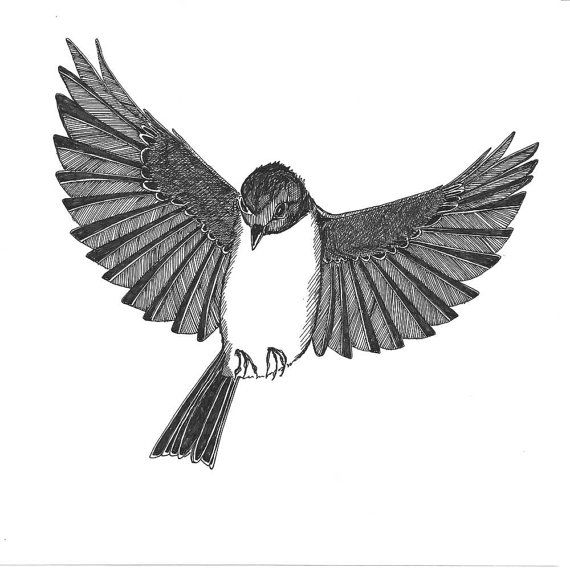 Drawn brds ink Drawing Drawing Birds Flying Up