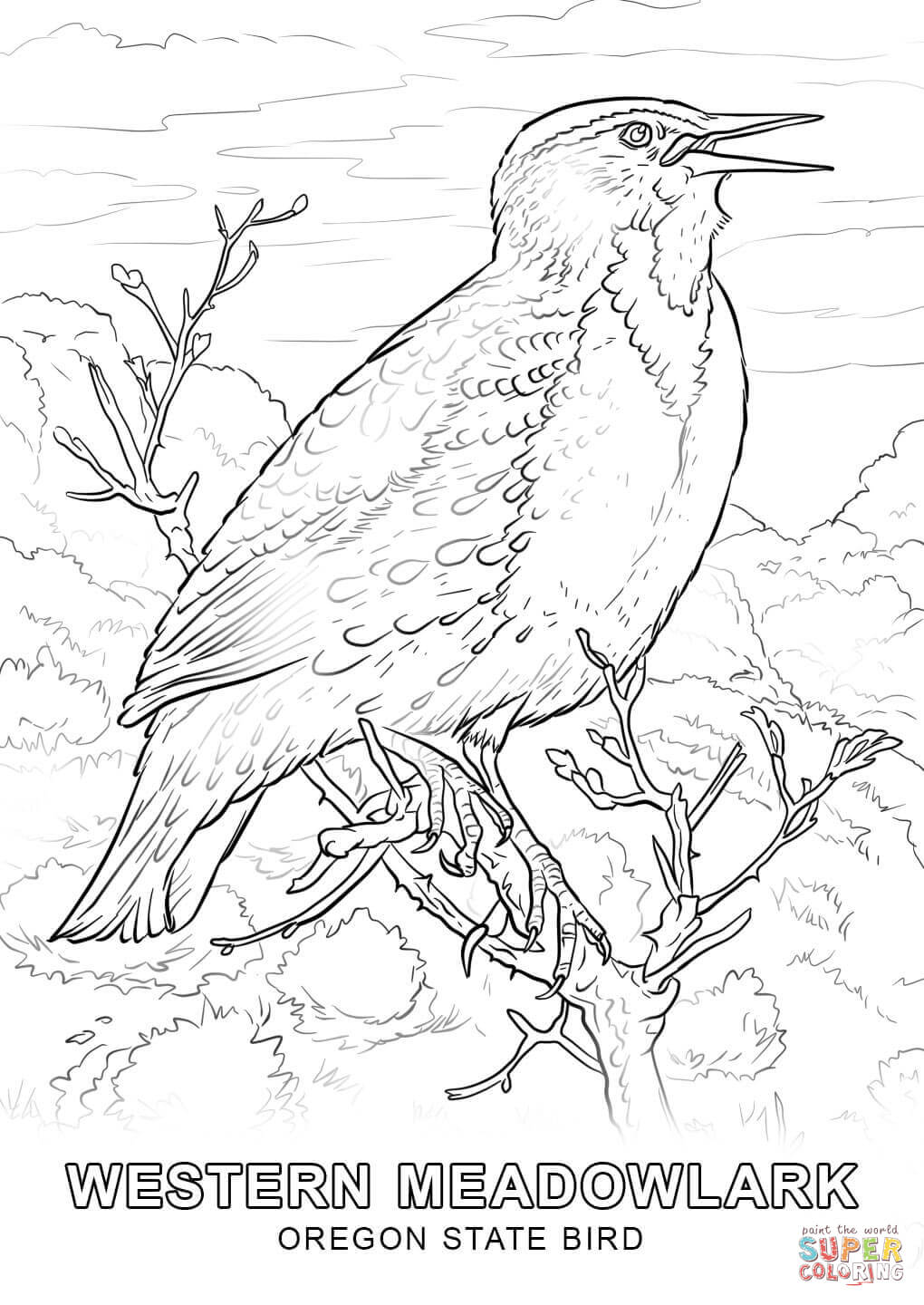 Drawn brds coloring page Oregon Coloring Click Pages Printable