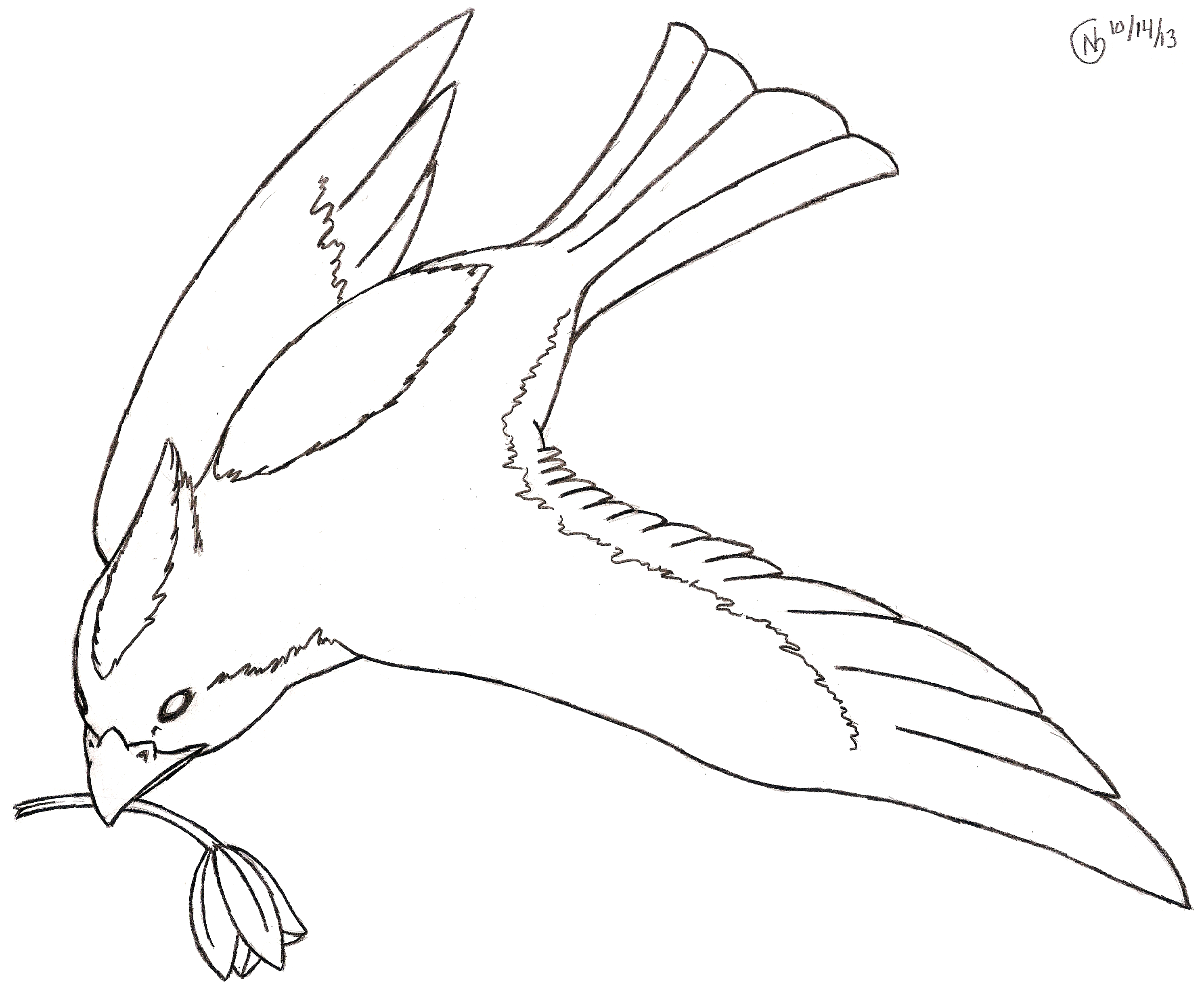 Drawn parrot bird fly Three on Clipart Flying Free