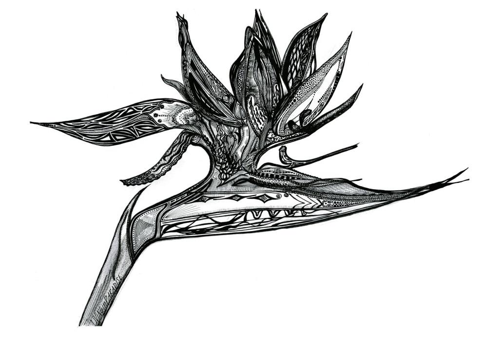 Drawn brds paradise Of Paradise hand design ShockT