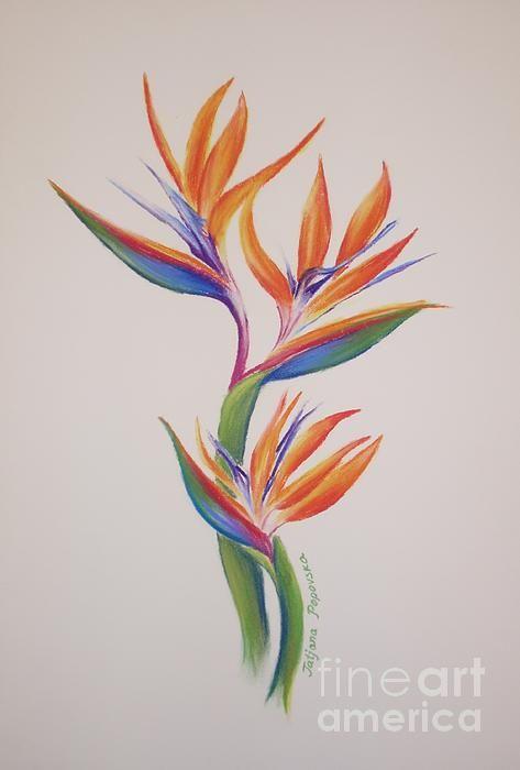 Drawn brds paradise Ideas on 25+ of Pinterest