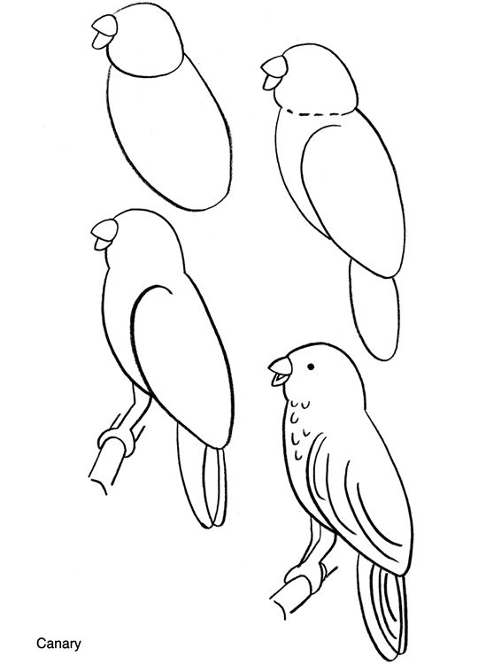 Parrot clipart tree drawing To on and birds draw