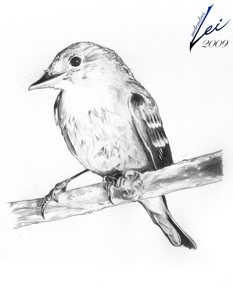 Drawn brds perched bird Pencil Drawings: in Of gt;