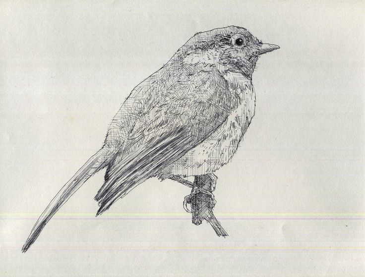 Drawn brds perched bird Best her on frail perched