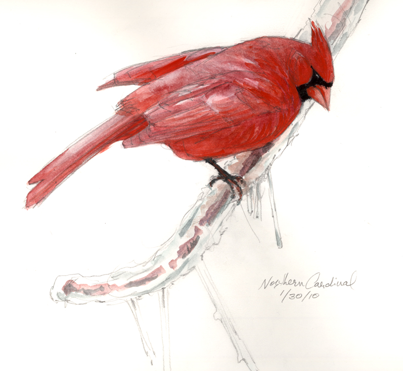 Drawn brds red robin North North Bird Bird The