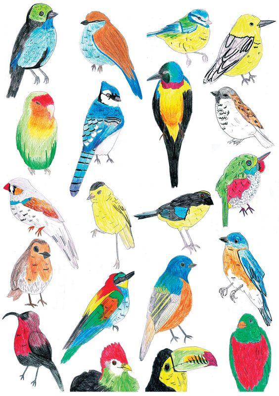 Drawn brds tropical bird Birds Tropical Illustrations Bird Bird