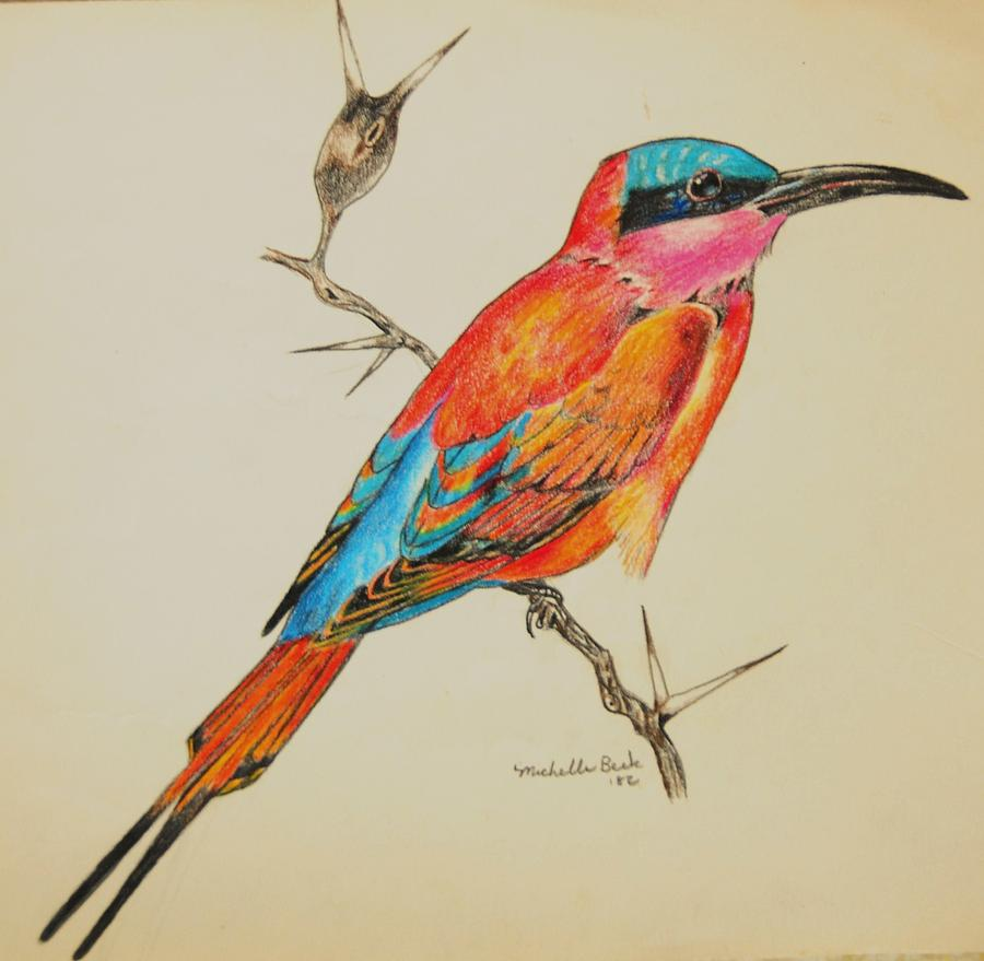 Drawn brds tropical bird Drawings  Beautiful birds/tropical birds/tropical